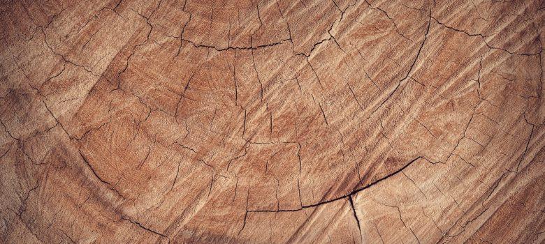 Zirbenkiefer und Zierbenholz